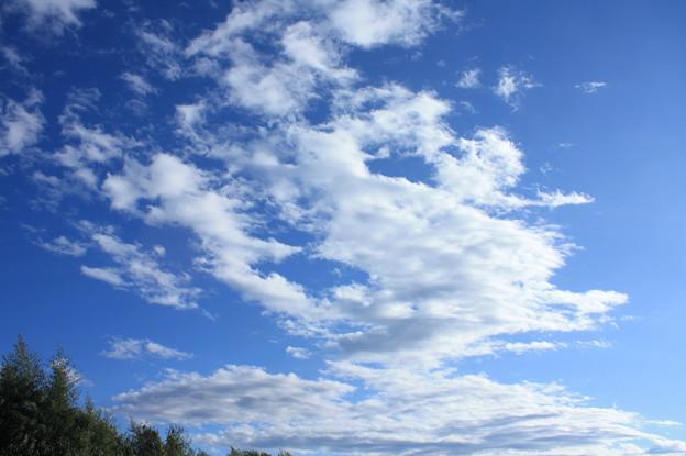 秋の空と雲