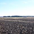 冬の田園風景 (2)