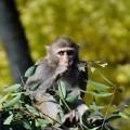 Photos: お猿さん ♪