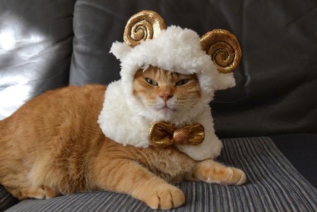 メリーさんの羊♪