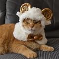 Photos: メリーさんの羊♪