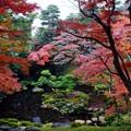 写真: 殿ヶ谷公園の紅葉