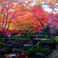写真: 紅葉の旬