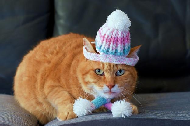 写真: 冬の装い