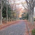 Photos: ケヤキ道