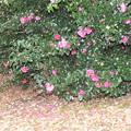 公園の植え込みに咲く花