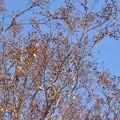 写真: ノリタケの森で~