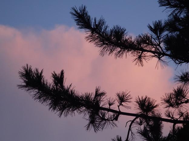 朝日にあたった雲と松と