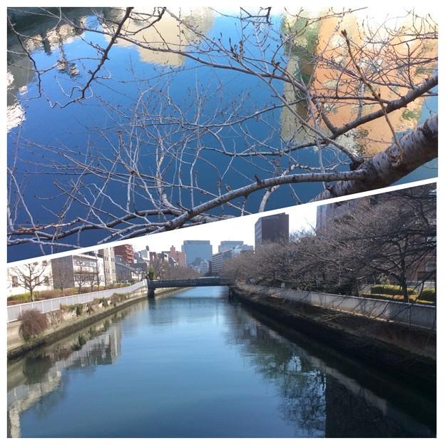 大横川  黒船橋付近(花見の舟は3/28~)