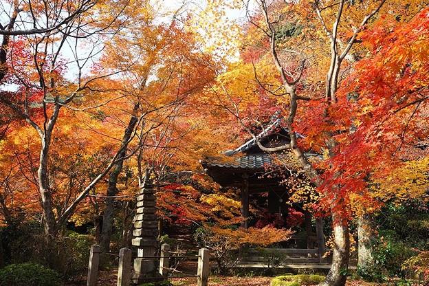 写真: 勝持寺