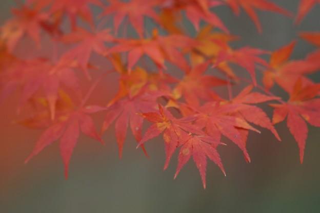 紅葉まつり05