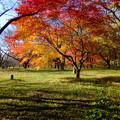 みなさま是非紅葉の時期の高遠城趾公園を訪れてみて下さい