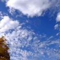 写真: 乙女心と秋の空は繊細