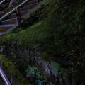 落ち葉      階段      苔      竹