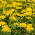 Photos: 春は希望に満ちている