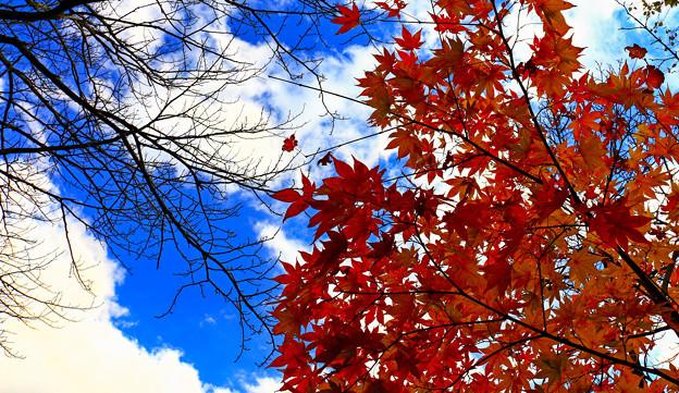 秋天的天空