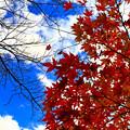 写真: 秋天的天空