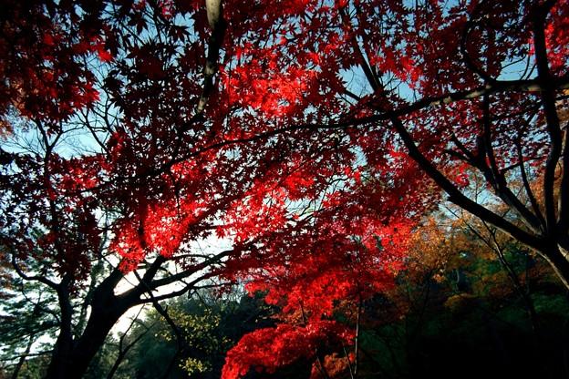 三渓園の赤