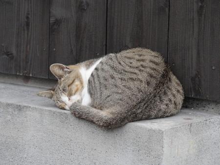 佐柳島の猫