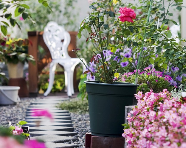 仲秋の庭/薔薇たち