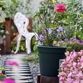 写真: 仲秋の庭/薔薇たち