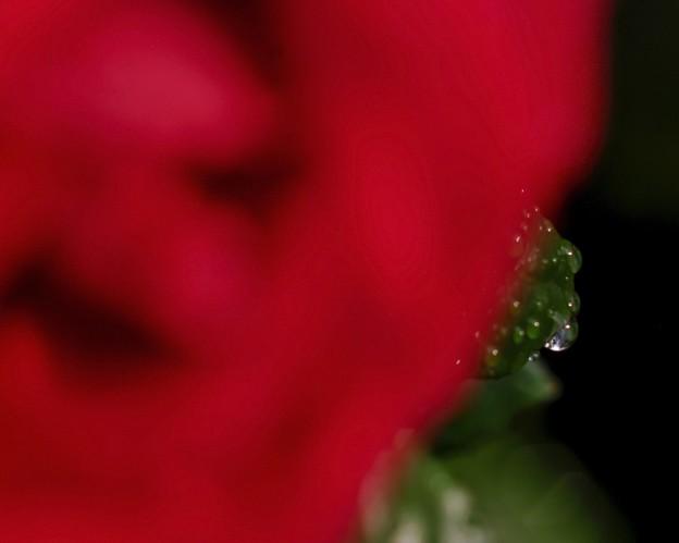 雨の午後/薔薇のイヤリング