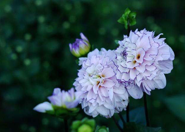 仲秋の庭/香る