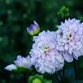 写真: 仲秋の庭/香る