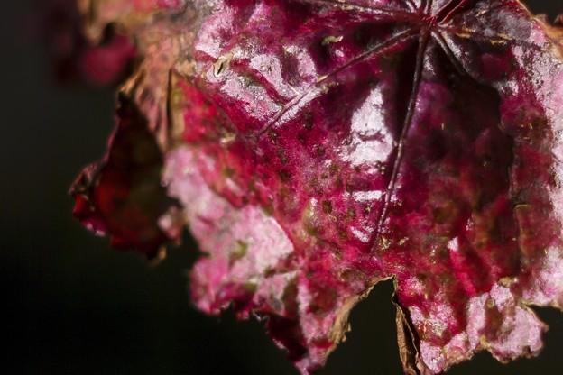 「秋を包むと・・・」