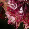 写真: 「秋を包むと・・・」