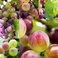 写真: ジューシー goodly grape フルーツ