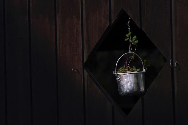 写真: 晩秋の庭/goods 3