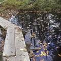 写真: 西岡公園の秋/木道を往く