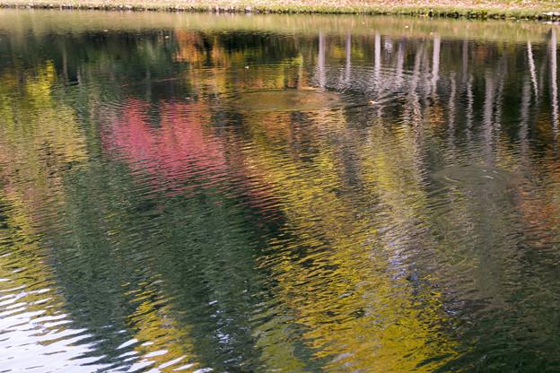 写真: 紅桜公園/錦秋 4/水面に映るもみじかな