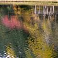 紅桜公園/錦秋 4/水面に映るもみじかな