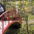 写真: 紅桜公園/錦秋 6/庭園に続く紅い橋