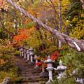写真: 紅桜公園/錦秋 11/紅葉道の先に開拓神社