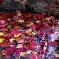 写真: 紅桜公園/錦秋 12/朽葉