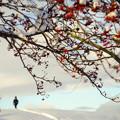 写真: 冬/少しだけ温かい光 1
