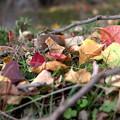 写真: 見過ごした秋