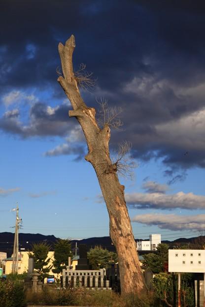 写真: 暗雲に昇竜のごとく