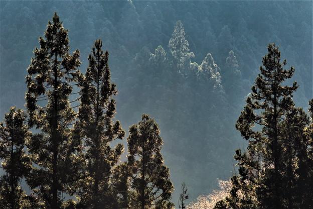 山間の景色