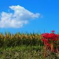 写真: 秋景色