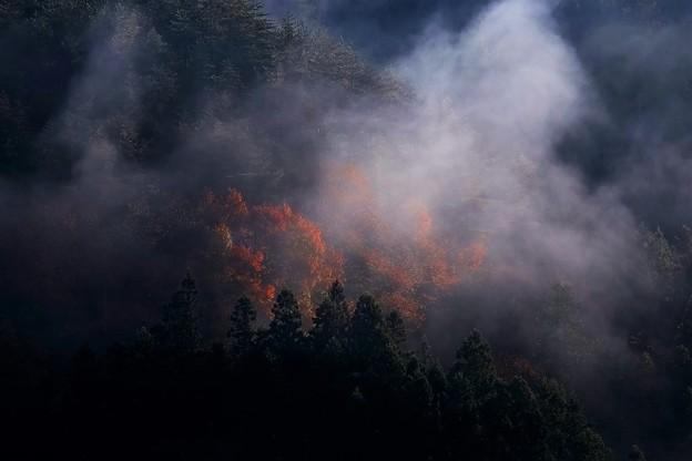 写真: 朝の霧