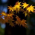 写真: 秋景4