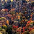 写真: 秋景10
