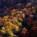 Photos: 染まる山肌