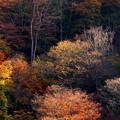 写真: 晩秋近し