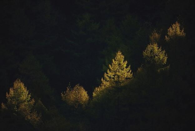 晩秋の輝き