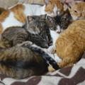 写真: 猫団子ですね~^^。